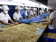 Ministerio de Agricultura llama a elevar calidad de anacardo vietnamita