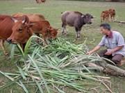 Vietnam asiste a provincias pobres en región del Centro del país