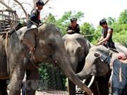 Vietnam desarrollará modelo turístico amigable con elefantes
