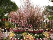 Celebrarán festival Vietnam en prefectura japonesa de Kanagawa