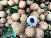 Vietnam promueve venta de longan a pocas semanas de comenzar recolección de la fruta
