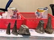 Incautan en el aeropuerto vietnamita de Tan Son Nhat 12 cuernos de rinoceronte
