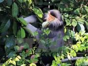 Provincia vietnamita realiza proyecto para proteger  primates raros