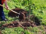 Lanzan campaña de plantación de árboles en provincia norteña de Vietnam