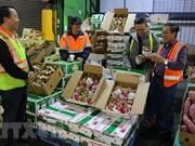 Aumentan ganancias por exportaciones de vegetales y frutas de Vietnam en lo que va de año