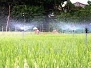 Provincia vietnamita de Ninh Thuan obtiene beneficio del cultivo de espárrago