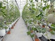 Ciudad Ho Chi Minh por fomento del desarrollo agrícola