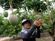 Unión Europea constituye mercado potencial para frutas y verduras tropicales de Vietnam