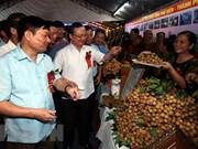 Celebran festival de longan en provincia vietnamita de Hung Yen