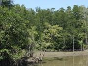 Desarrollan los manglares de Can Gio