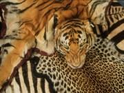 Cooperación internacional contra tráfico ilegal de animales