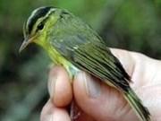 Censan tres nuevas especies en Viet Nam