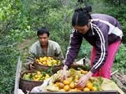Viet Nam, ejemplo del desarrollo