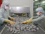Asociación vietnamita protege exportadores de camarón