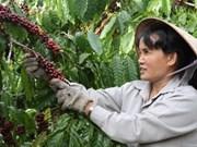 Café vietnamita en supermercados de EE.UU. y Sudcorea