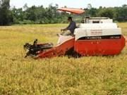 Inauguran festival de arroz en Viet Nam