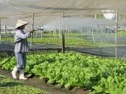 Japón ayuda a Viet Nam a supervisar higiene alimentaria