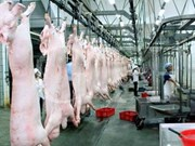 Construyen mayor complejo de procesamiento alimentario en Vietnam