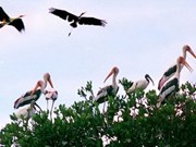 Aves preciosas emigran a provincia sureña de Vietnam