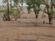 Respaldo internacional a reserva de manglares vietnamitas