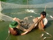 Ayuda FAO a Vietnam a prevenir enfermedades en camarones