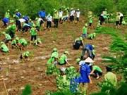 Millonaria inversión en ecosistema de manglares en Binh Dinh