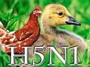 Asistencia estadounidense a lucha contra gripe aviar