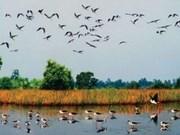 Esfuerzos en Delta del Mekong para preservar humedales