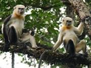 Registran crecimiento de endémico animal de Ha Giang