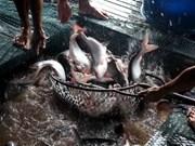 Aumentan exportaciones de pescado Tra a Rusia