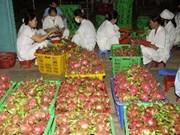 Autorizan exportación directa de pitahayas a EE.UU.