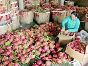 Pitahaya, estrella de frutas exportables