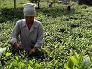 Ceremonia honra cultura milenaria del té