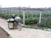 Exportación vegetal por ingresar mil millones USD
