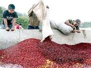 Tay Nguyen se preprara para desarrollo sostenible de café
