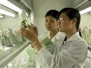 Cultivo biotecnológico contribuye a seguridad alimentaria