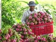 Vietnam y Países Bajos cooperan en horticultura