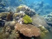 Recupera Indonesia arrecifes en isla de Bali