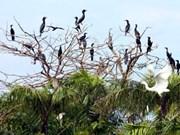 Bac Lieu conserva santuario de aves