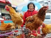 Vietnam refuerza control de gripe aviar en frontera