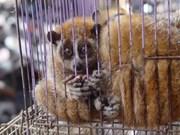 Animales salvajes ofertados por internet en Vietnam