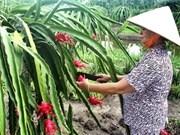 Nueva Zelanda ayuda Vietnam en frutales de pitahaya