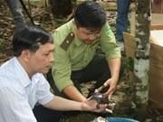 Vietnam recibe tortugas exóticas