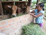 Asistencia internacional para mejorar ingreso de pobres vietnamitas