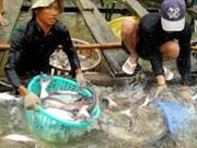 Venta de pescado Tra podrá superar mil 800 millones de USD