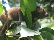 Vietnam traza estrategia para minimizar consumo de animales salvajes
