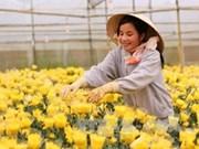 Da Lat aspira a ser centro internacional de horticultura