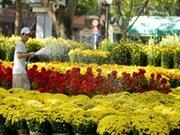 Floricultores vietnamitas se preparan para el Tet