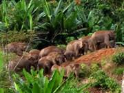 Indonesia y EE.UU. cooperan en protección de bosques lluviosos