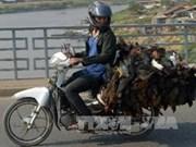Provincia vietnamita fortalece lucha contra gripe aviar